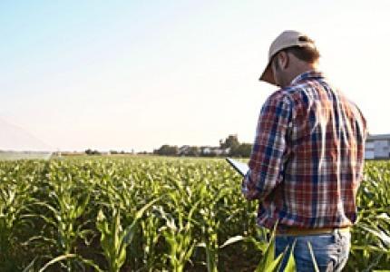 Минимален осигурителен доход за земеделски производител, работещ и на трудов договор